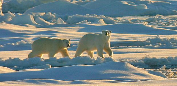 Groenlandia e Islandia, un recorrido por el paraíso helado a bordo de Hurtigruten