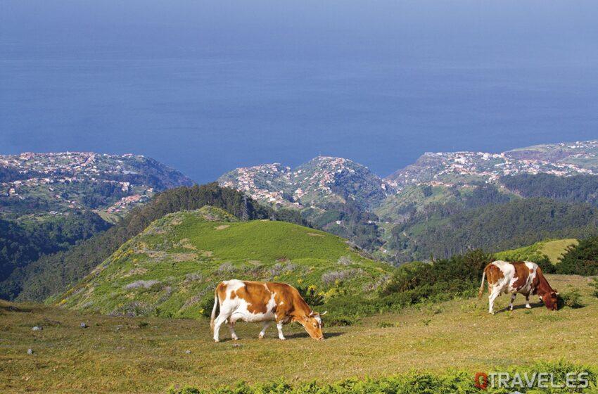 Madeira un jardin en el Atlántico