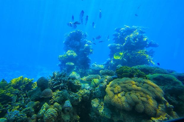 Los arrecifes coralinos de Eilat en el Mar Rojo, son los mejor conservados