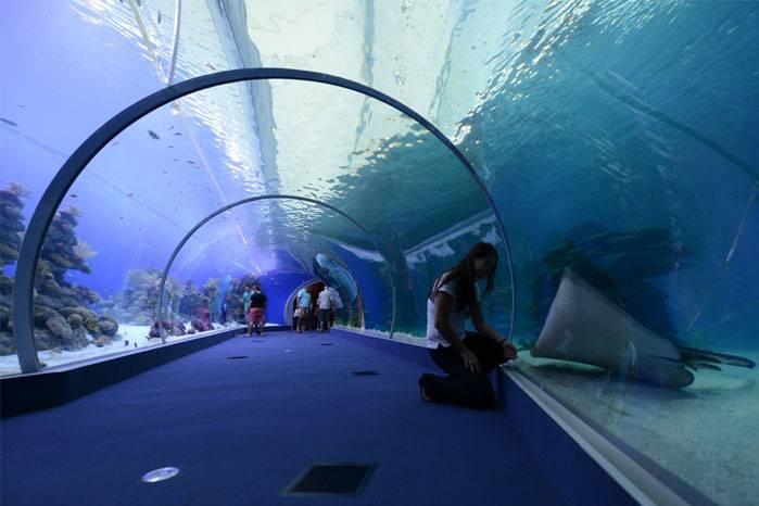 Se inaugura Sharks World en Israel – la mayor piscina de tiburones en Oriente Medio