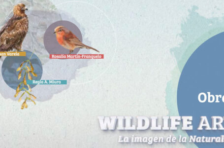 Exposición Wildlife Art en el Festival de las Aves de Cáceres
