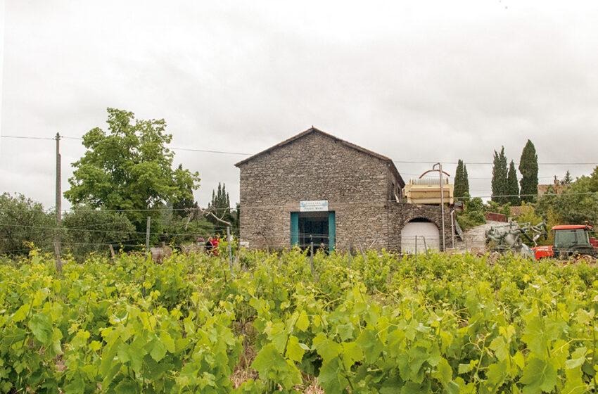 Enoturismo en el Languedoc-Rosellón: La Prade Mari