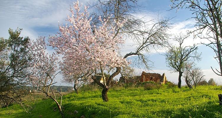 El Algarve te invita a descubrir sus almendros en flor