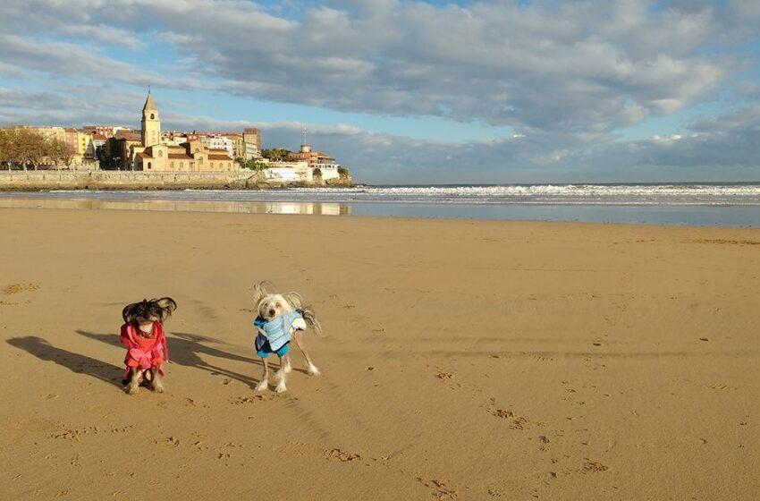 Gijón, destino dog friendly
