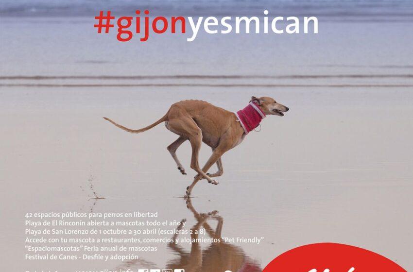 Gijón, finalista de los premios TravelGuau como mejor ciudad dogfriendly