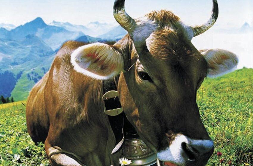 Suiza: más de un queso por cada día del año