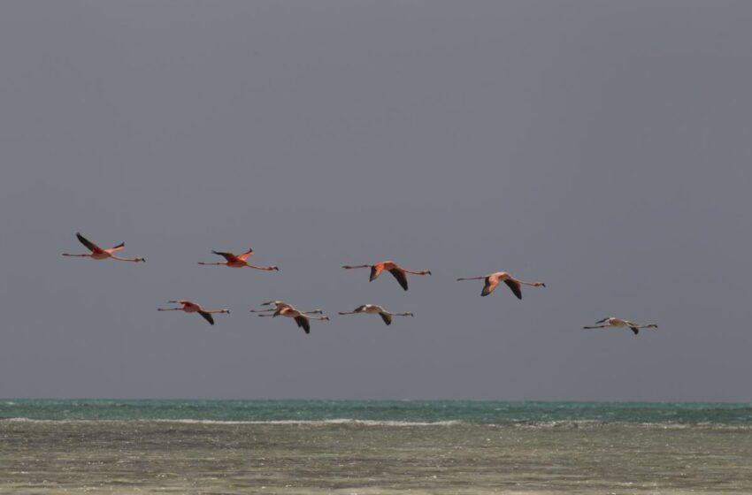 Las Bahamas, un refugio de fauna entre playas cristalinas