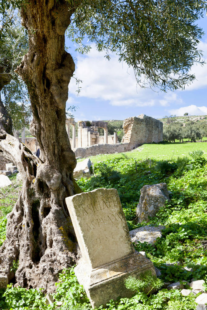 Sepulcros en los olivares