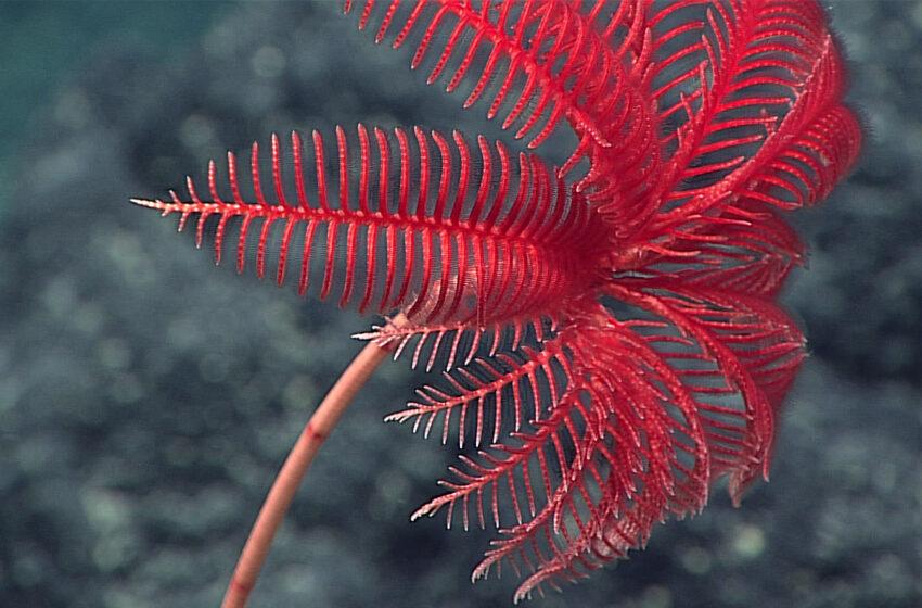 10 Cosas que no sabias sobre el océano profundo