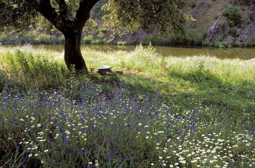 Qué ver y qué hacer en Alentejo, naturaleza y aire puro al lado de casa