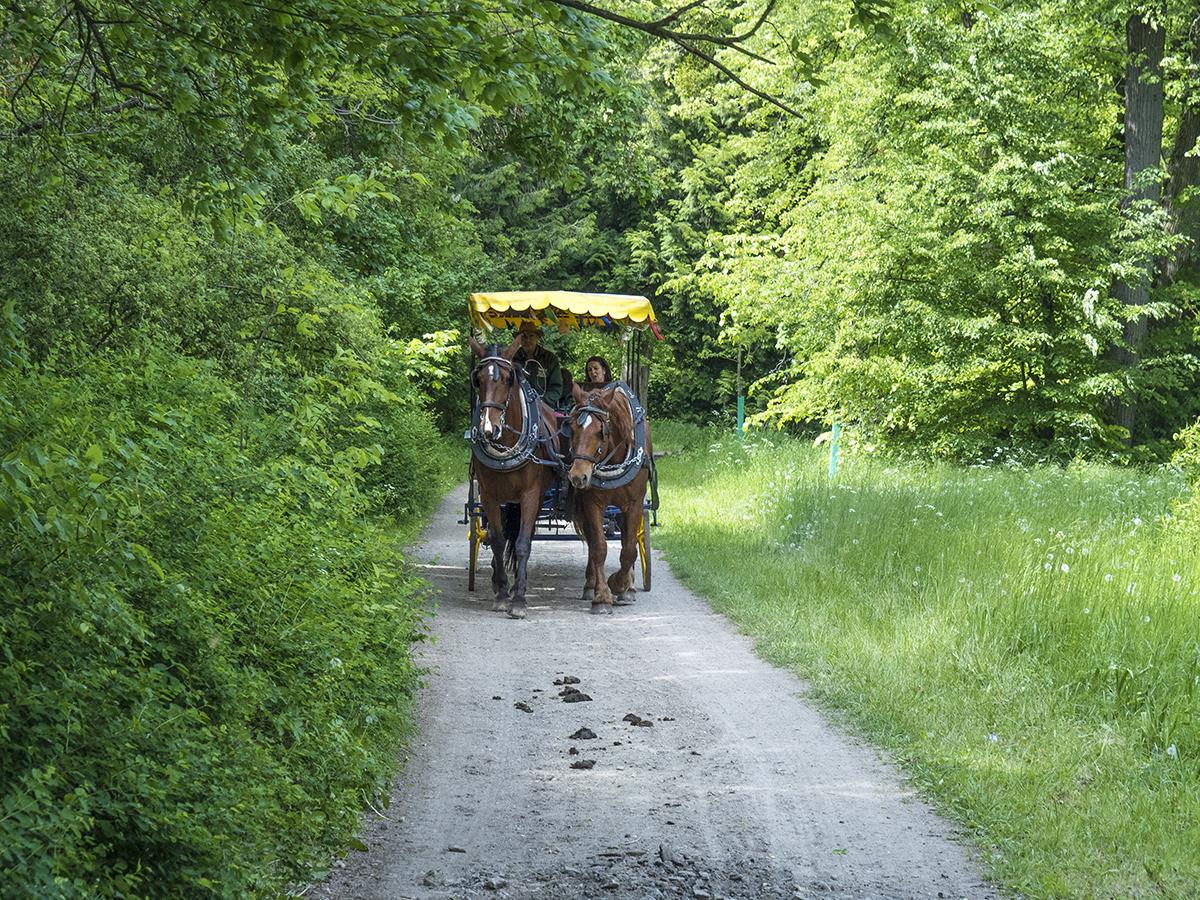 Paseo en calesa por los bosques de Lednice